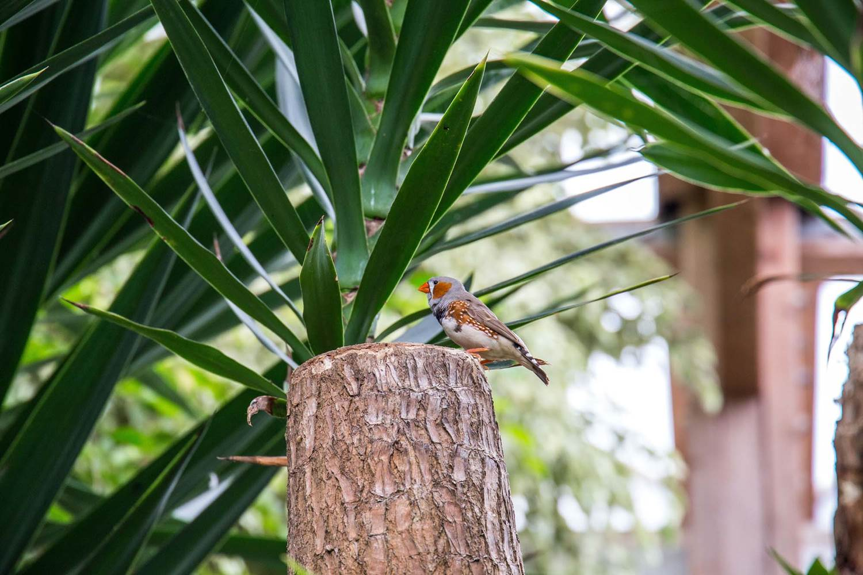 jardin-aux-papillons-morbihan-bretagne-sud-26 © © Magalie BARRE