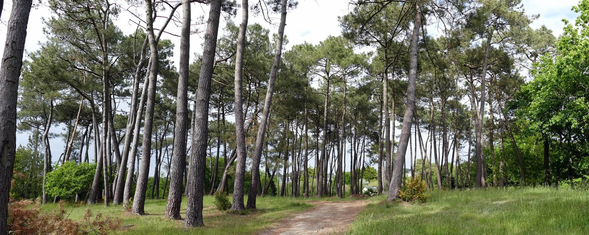 Bois du camping ©