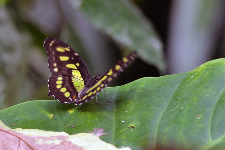 jardin-aux-papillons-morbihan-bretagne-sud-16 © Michel RENAC