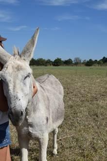 Câlins aux ânes - Nivillac