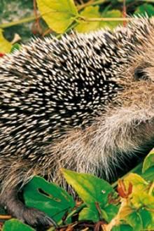 Exposition : Ces petits animaux qui aident le jardinier