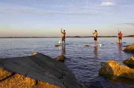 Balade nature dans le golfe du Morbihan en Stand Up Paddle