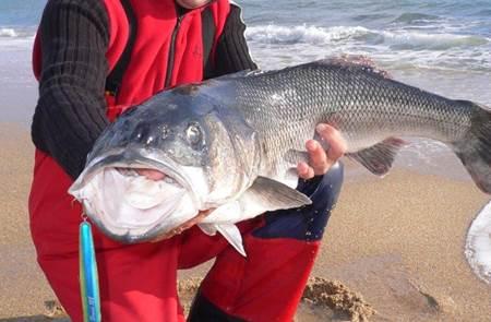 Guide de pêche Morbihan