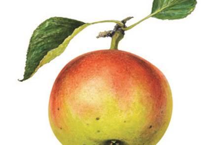 La Pomme dans tous ses états au Moyen-Age