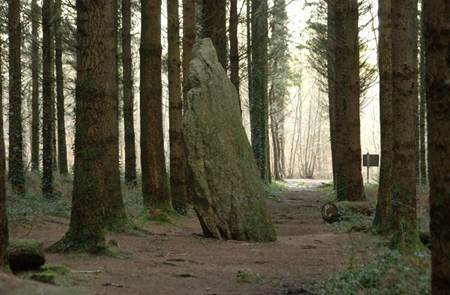 Les Mégalithes et le Menhir de l'étoile en forêts de Camors et Floranges