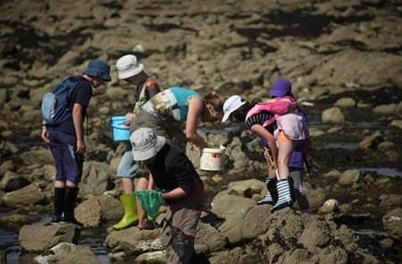 Initiation pêche à pieds, découverte de l'Estran à Saint-Pierre Quiberon